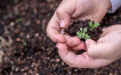 Cuidem la Terra. Petits grans actes que podem fer.